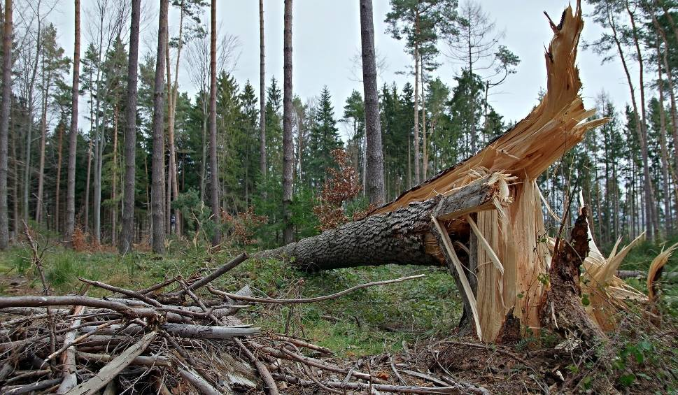 Film do artykułu: W Lubuskiem silne wiatry! W Słubicach porywy osiągnęły 70 km/h