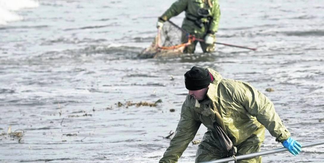 Zawodowi poszukiwacze bursztynu mają zazwyczaj stroje ochronne i sprzęt do przeczesywania piasku (zdjęcie archiwalne)