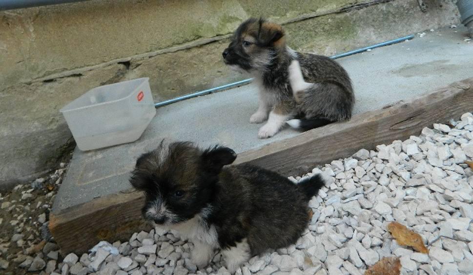 Film do artykułu: Pieski znalezione w gminie Czarnocin szukają domu. Są przyjaźnie nastawione do ludzi