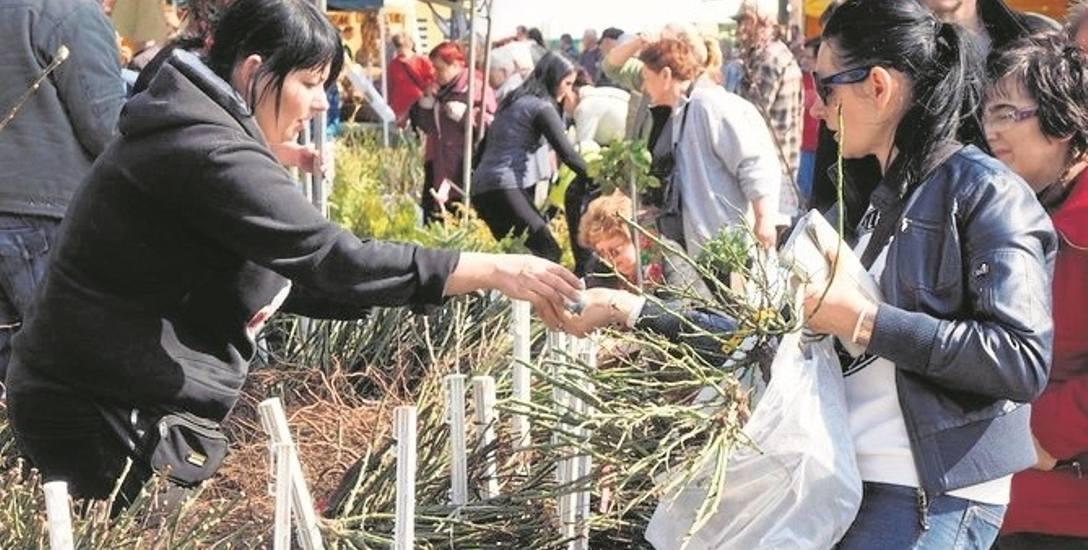W ten weekend można się już rozejrzeć za przydatnymi na wiosnę w ogrodzie sadzonkami, nasionami oraz drzewkami