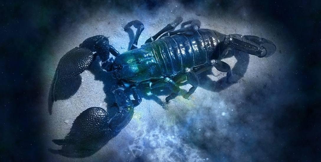 Skorpion (23 października - 21 listopada)