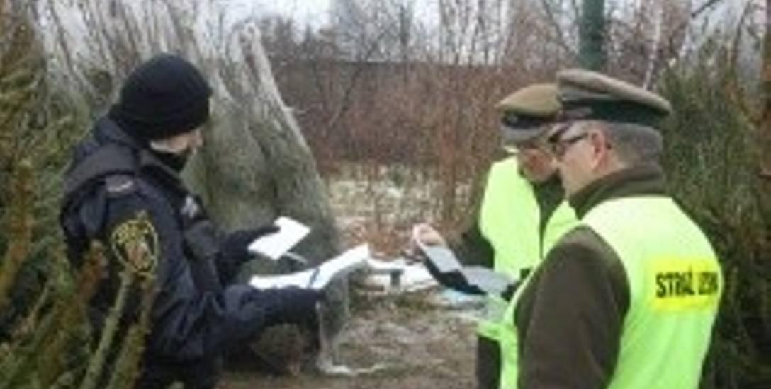 Strażnicy miejscy i leśni podczas kontroli na toruńskim targowisku. Sprzedawcy muszą udowodnić, skąd pochodzą drzewka