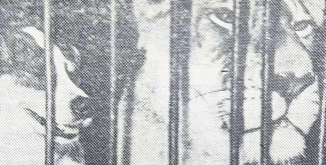 To zdjęcie miało przekonać czytelników, że jedna z handlarek na placu Grunwaldzkim zabrała ze sobą lwa i psa w klatce