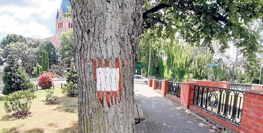 Ulica Zamkowa - plac Sowińskiego w Szczecinku, biały prostokąt na drzewie to przygotowane miejsce pod oznaczenie nowych , historycznych szlaków rowe