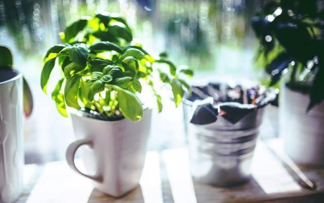 Ukochane zioło w ceramicznym kubku, którego i tak nie używamy, to ciekawy pomysł na to by mieć pod ręką bazylię, tymianek lub oregano, które dodatkową