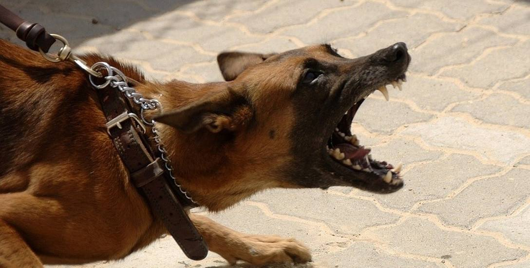Wyższe kary za brak nadzoru nad zwierzętami. Nawet 5 tysięcy złotych