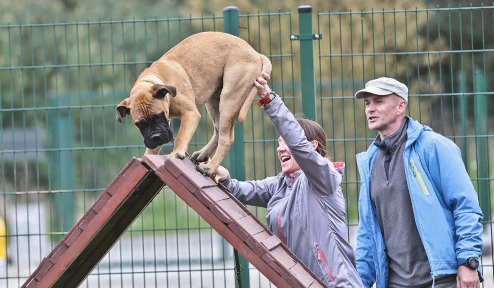 Film do artykułu: Trening szczeniaków na poligonie w Zielonej Górze [WIDEO, ZDJĘCIA]