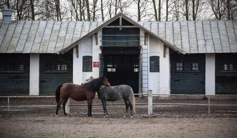 Film do artykułu: Nalot posłanek PO na stadninę koni w Janowie Podlaskim. Chcą wglądu w dokumenty