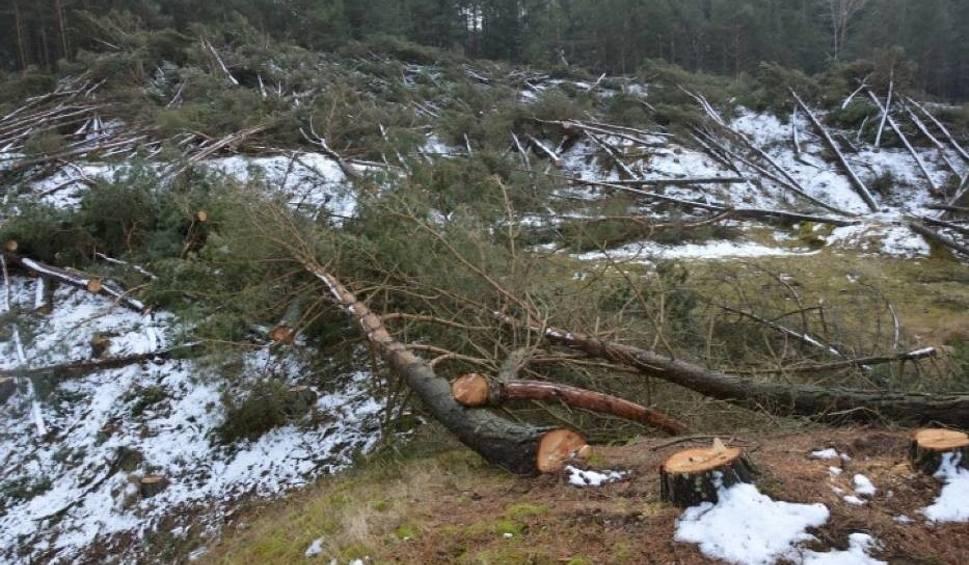 Film do artykułu: W miejscu wycinki kilkuset drzew w Łebie muszą posadzić 17 tys. sosen! [zdjęcia]