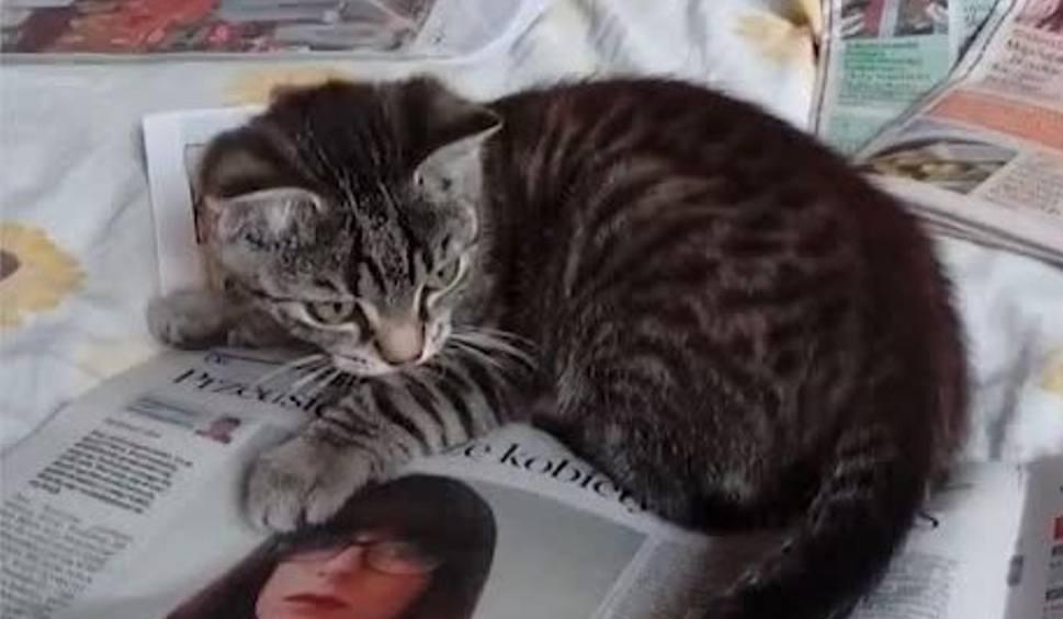 """Film do artykułu: """"Gazeta Lubuska"""" w łapach kota. Nawet zwierzak ją lubi. Zobaczcie film Czytelniczki"""
