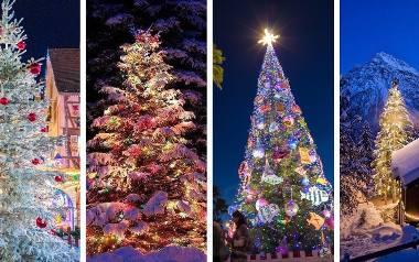 NAJPIĘKNIEJSZE CHOINKI z całego świata. Wyjątkowe zdjęcia drzewek w zimowej scenerii ZDJĘCIA