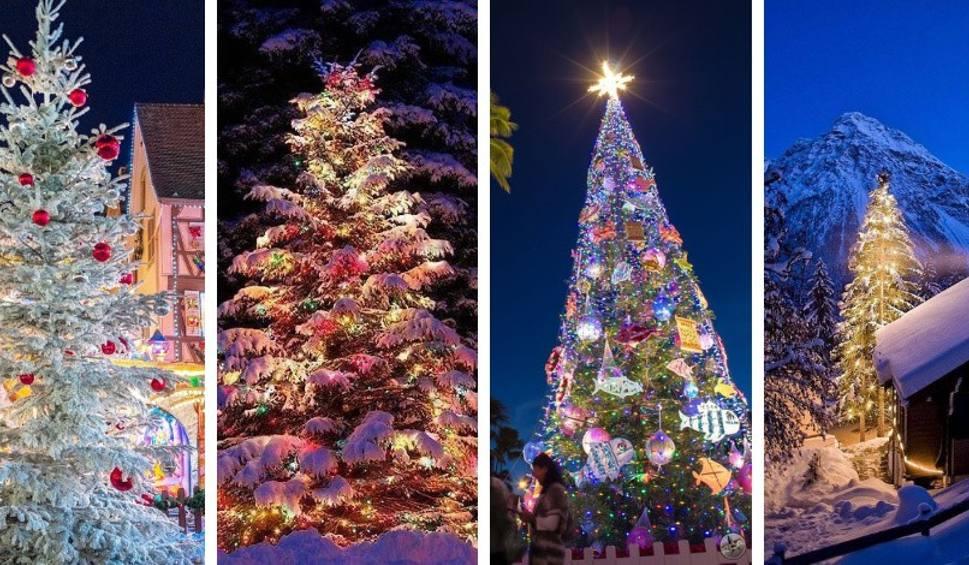 Film do artykułu: NAJPIĘKNIEJSZE CHOINKI z całego świata. Wyjątkowe zdjęcia drzewek w zimowej scenerii ZDJĘCIA