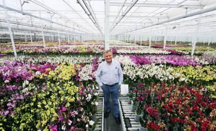 Jarosław Ptaszek: Obecnie wszystkie hale mają łączną powierzchnię ponad 15 hektarów. Firma JMP Flowers słynie na całym świecie z orchidei, róż cięty