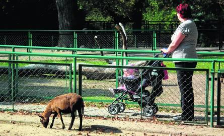 Stare Zoo od zabudowy deweloperskiej chronią zapisy z 2007 roku. Mimo to mieszkańcy obawiają się tego, że zamiast ogrodu powstaną budynki mieszkalne