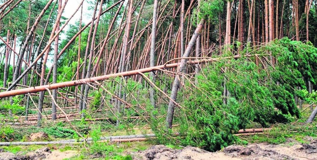 Lasy nie są ranne. Są zabite!