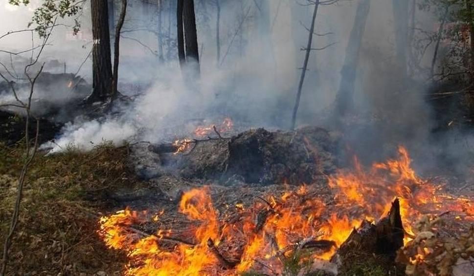 Film do artykułu: Leśnicy apelują o ostrożność - rośnie zagrożenie pożarowe. W majowy weekend możliwy zakaz wstępu do lasów!