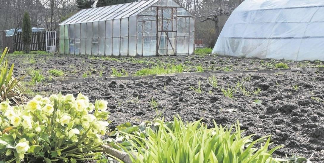 Na ziemi, do której nie mają żadnych praw, sadzą rośliny, a nawet stawiają namioty
