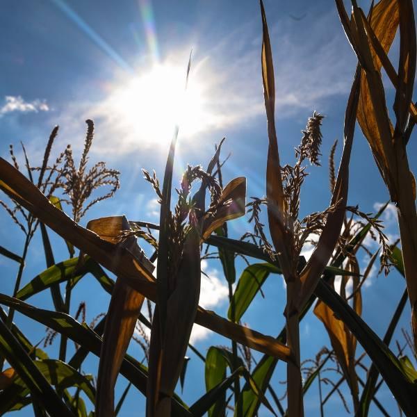 Rolnicy obawiają się, czy susza - wynikająca najprawdopodobniej z trwałych zmian klimatycznych - nie powtórzy się i w tym roku