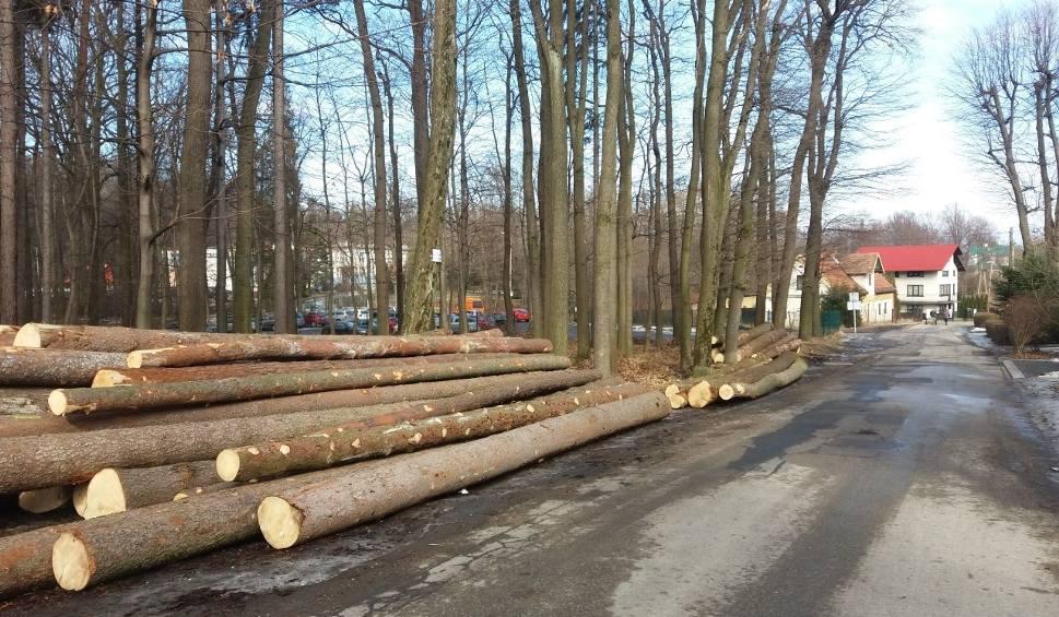 Film do artykułu: Masowa wycinka drzew w bielskim Cygańskim Lesie. Wezwano policję ZDJĘCIA