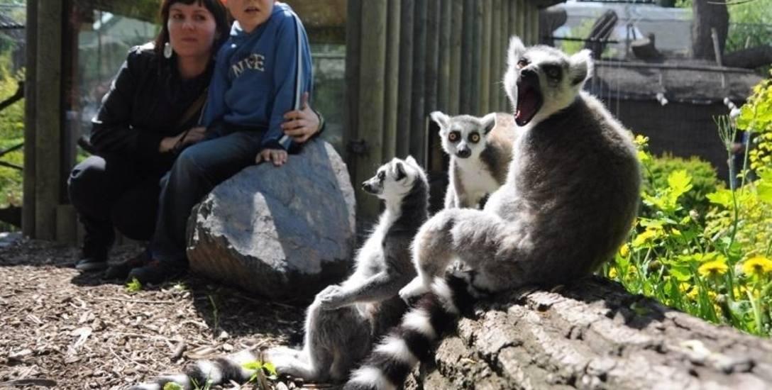 Będzie obniżka cen biletów do zoo w Opolu? Radni PO w kontrze do prezydenta
