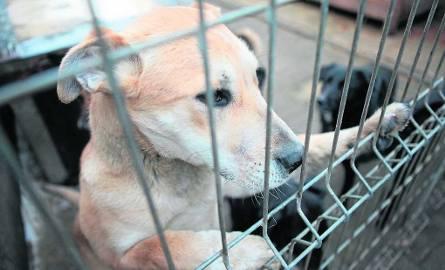 Miłośnicy zwierząt krytykują warunki w punkcie adopcyjnym w Margoninie