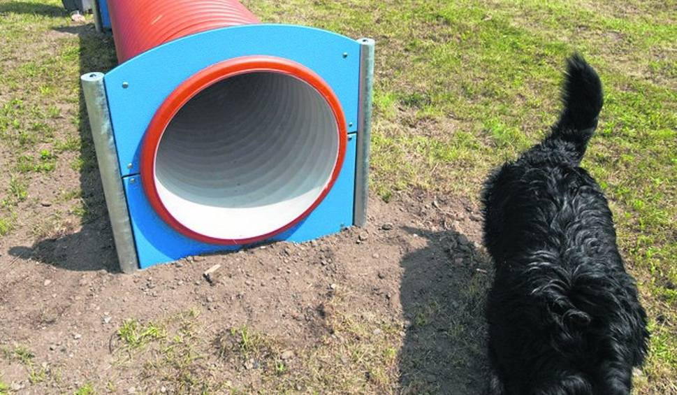 Film do artykułu: Psi park w Koszalinie już gotowy