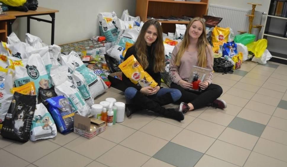 Film do artykułu:  Uczniowie Bartosza zebrali jedzenie i leki dla biednych psów z przytuliska [ZDJĘCIA]