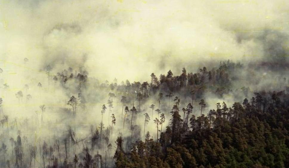 Film do artykułu: 25 lat po wielkim pożarze lasów w Kuźni Raciborskiej. Zobaczcie niezwykły film dokumentalny
