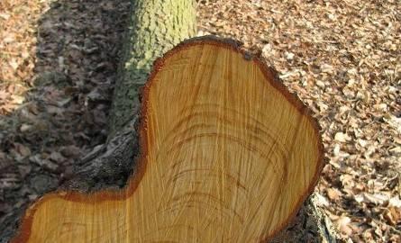 Skandal! Ktoś wyciął kilkadziesiąt zabytkowych drzew w Brzozie k. Strzelec!