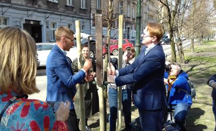Nowoczesna posadzi w Krakowie ponad 500 drzew