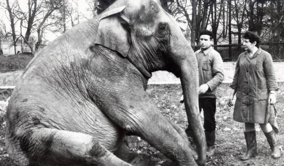 Film do artykułu: Ogrodu zoologicznego w Opolu nie stać na słonie