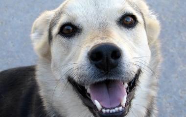 Felieton: Psy nie powinny umierać. Powinny po prostu znikać