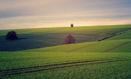 Nowe technologie w rolnictwie. Satelita prawdę ci powie?