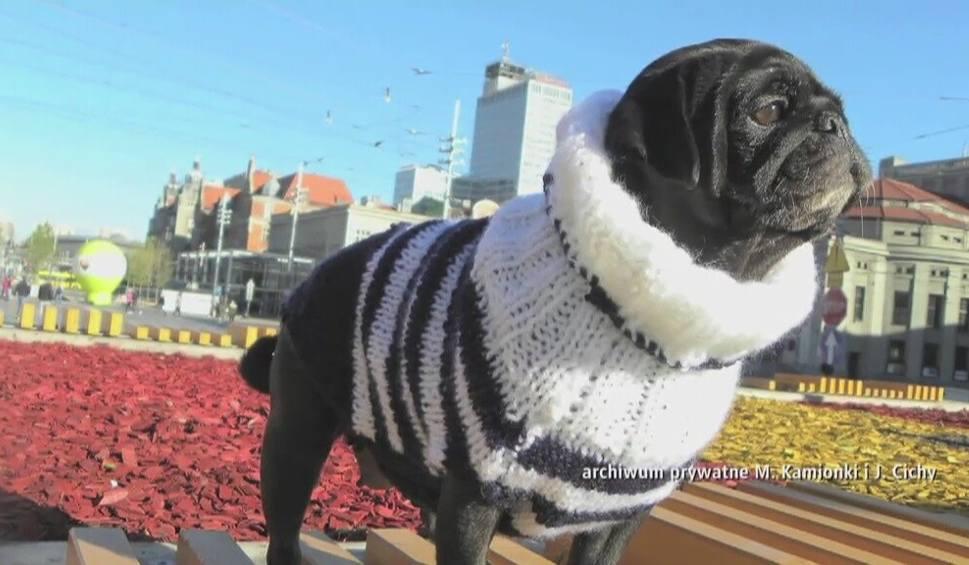 Film do artykułu: Swetry dla psów [WIDEO]