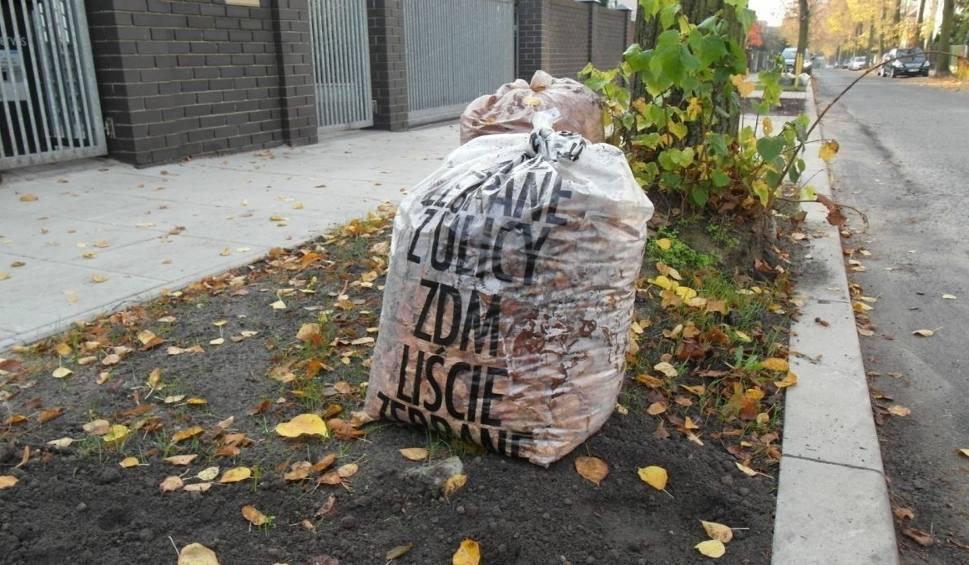 Film do artykułu: Rusza tegoroczna akcja zbierania liści z miejskich chodników w Poznaniu. ZDM zbiera zamówienia na worki