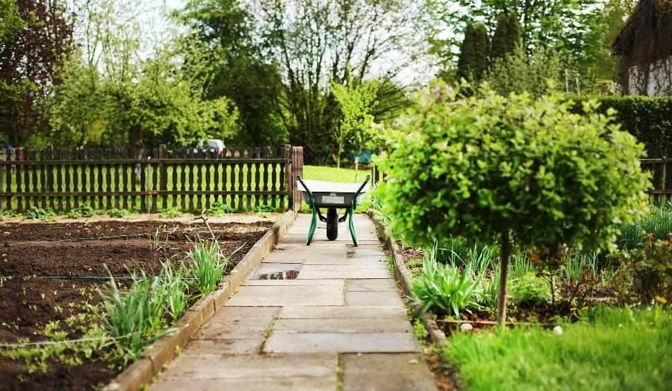 Film do artykułu: Wszystkie ogródki działkowe w Zielonej Górze i Nowej Soli sprzedane. To widać też w handlu. Szybko sprzedają się sadzonki