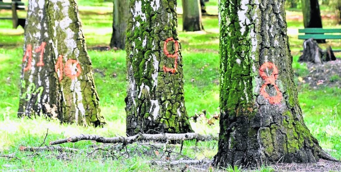 Kilkadziesiąt drzew w parku może pójść do wycinki. Powód? Bezpieczeństwo ludzi