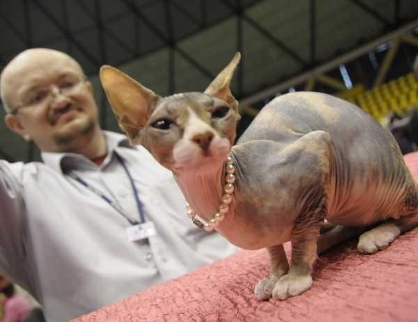 Koty Pasja I Niezły Biznes Ntopl