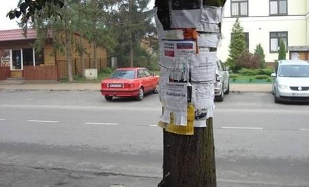 …wiesza się je więc na drzewie.