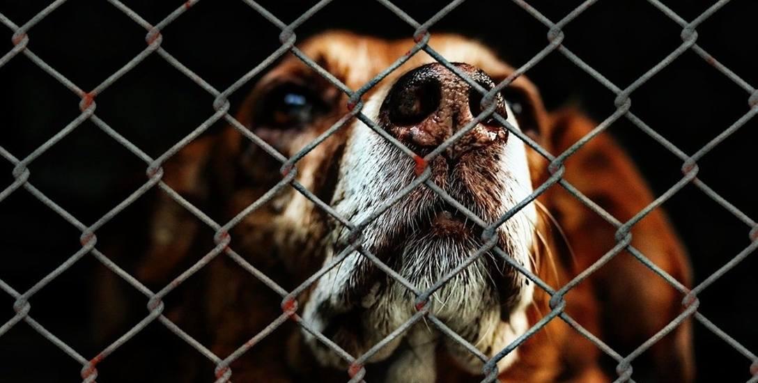 Oskarżeni o znęcanie się nad zwierzętami mieszkają na ul. Zamenhofa z nowymi psami