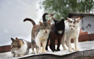 Język kociego ciała - co nam mówi kot