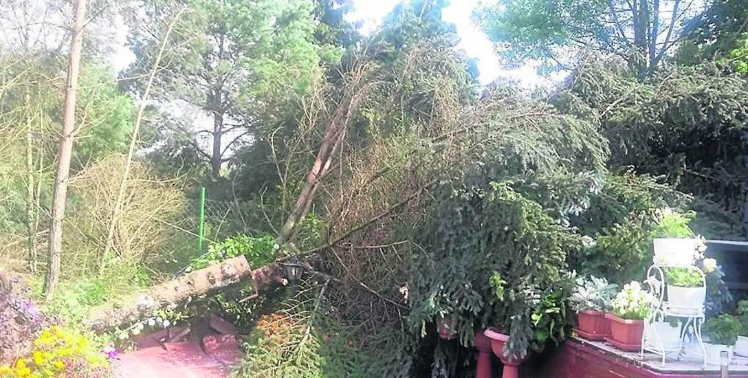 Tak wygląda jeden z ogrodów działkowych w Tryszczynie po przejściu silnej burzy z wichurą.