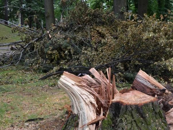 W bielskim parku zniszczono drzewa! Raport NIK jest jednoznaczny
