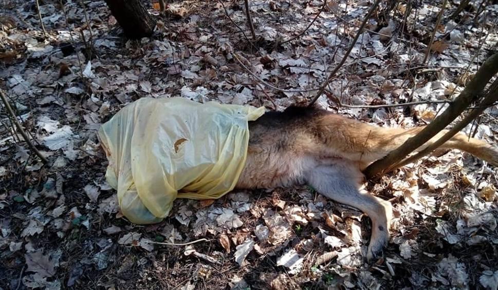 Film do artykułu: Skatowany pies porzucony w lesie w Mostach, w gminie Chęciny. Uwaga! Drastyczne zdjęcia