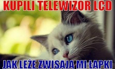 Memy na Dzień Kota 2019. Najnowsze i najlepsze memy o kotach. Śmieszne obrazki o naszych pupilach [NOWE MEMY 2019]