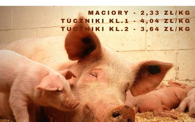 Ceny żywca wieprzowego - tuczniki ponad 4 zł. Notowania rynku [21.06.2015]