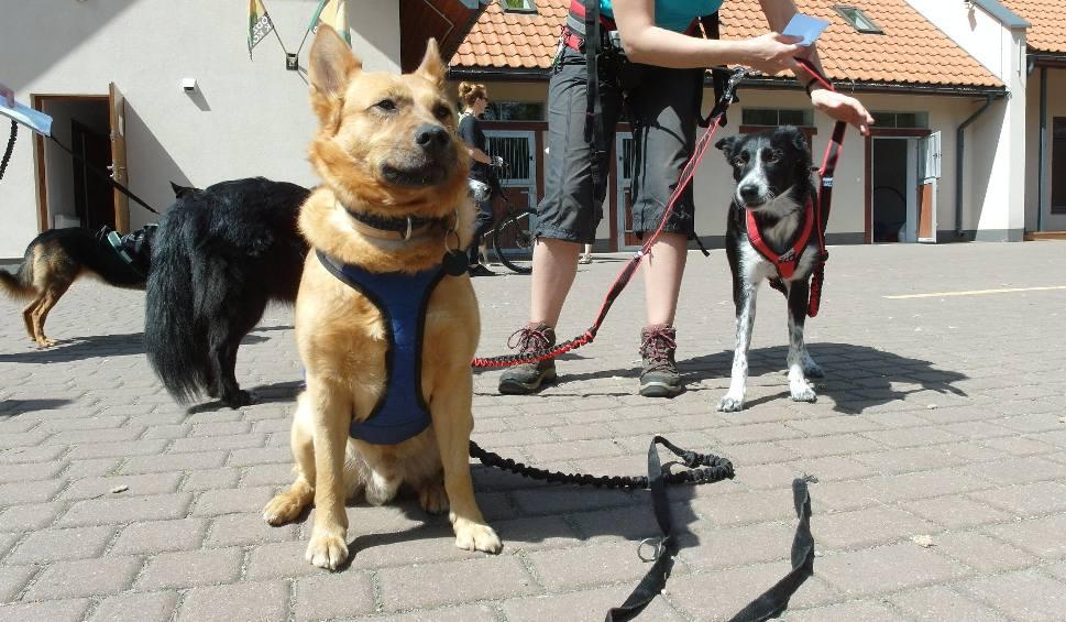 Film do artykułu: Dog Orient 2017 w Lesie Łagiewnickim [ZDJĘCIA]