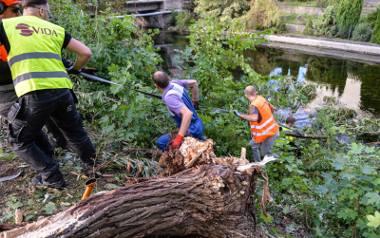 Trwa walka mieszkańców o udrożnienie przepływającego przez Rytel Wielkiego Kanału Brdy. Płynąca w dolinie Brda jest znacznie mniej zawalona drzewami.