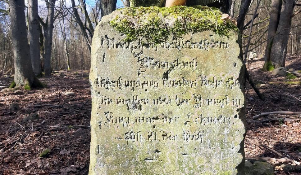 Film do artykułu: Podmiastecki Hammer - dawny majątek i osada. Na wzgórzu pozostały nagrobki (zdjęcia, wideo)