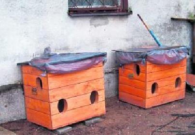 Ratusz ustawił 40 domków dla kotów. Będą kolejne. Urzędnicy proszą o wskazanie miejsc, gdzie potrzebne byłyby takie budki.